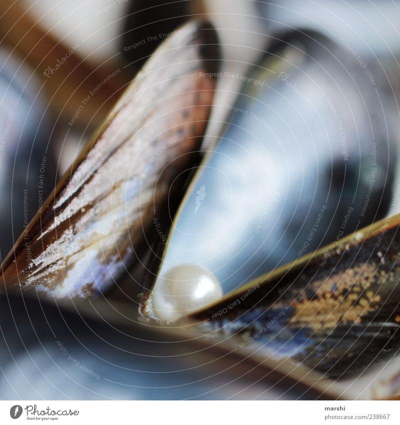 wertvoll Lebensmittel Meeresfrüchte Ernährung Muschel blau glänzend Schmuck Perle Fundstück Überraschung Schalenweichtier Kostbarkeit Farbfoto Nahaufnahme