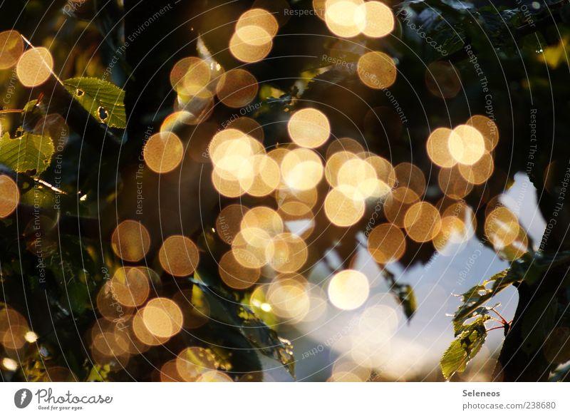 Sommerregen am Fenster (IV) Umwelt Natur Pflanze Wasser Wassertropfen Frühling Klima Wetter Regen Blatt glänzend leuchten frisch nass natürlich rund Unschärfe
