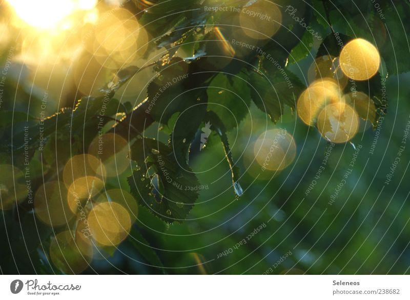 Sommerregen am Fenster V Umwelt Natur Landschaft Pflanze Wasser Wassertropfen Sonne Frühling Klima Wetter Schönes Wetter Regen Baum Blatt Garten glänzend frisch