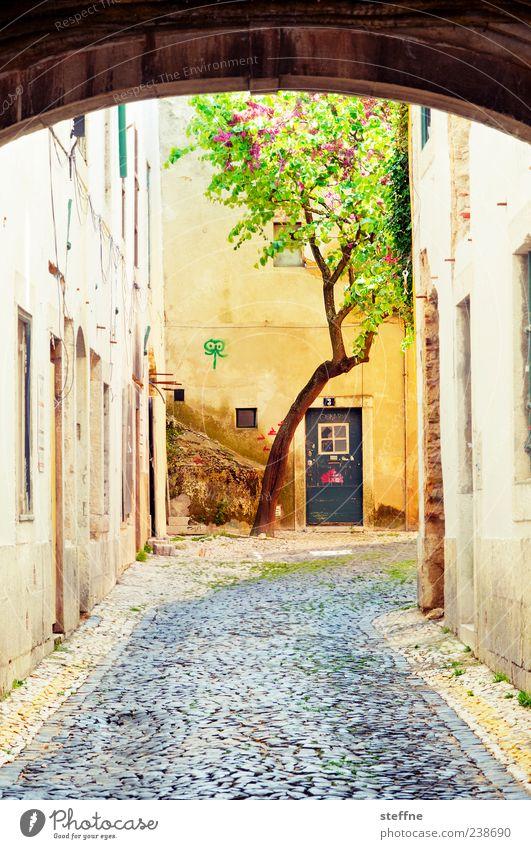naturban Baum Lissabon Portugal Altstadt Menschenleer Haus Mauer Wand Tür Wege & Pfade Stadt Natur Torbogen mediterran Mittelalter Süden Sommer