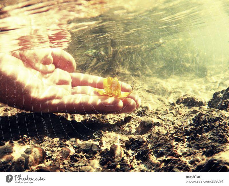 Grundblum Wasser Hand Pflanze Blume Blüte dreckig frisch Hoffnung Vergänglichkeit Bach Mensch Unterwasseraufnahme