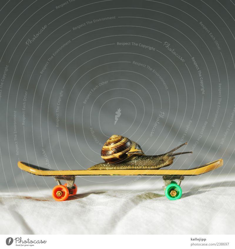 snailboarding Spielen lustig Zeit Geschwindigkeit Lifestyle fahren Ziel Skateboarding Idee Schnecke krabbeln rollen Fühler Eile langsam