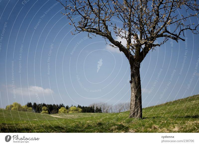 Frühling Himmel Natur schön Baum Einsamkeit ruhig Erholung Ferne Umwelt Landschaft Wiese Leben Frühling Freiheit träumen Horizont