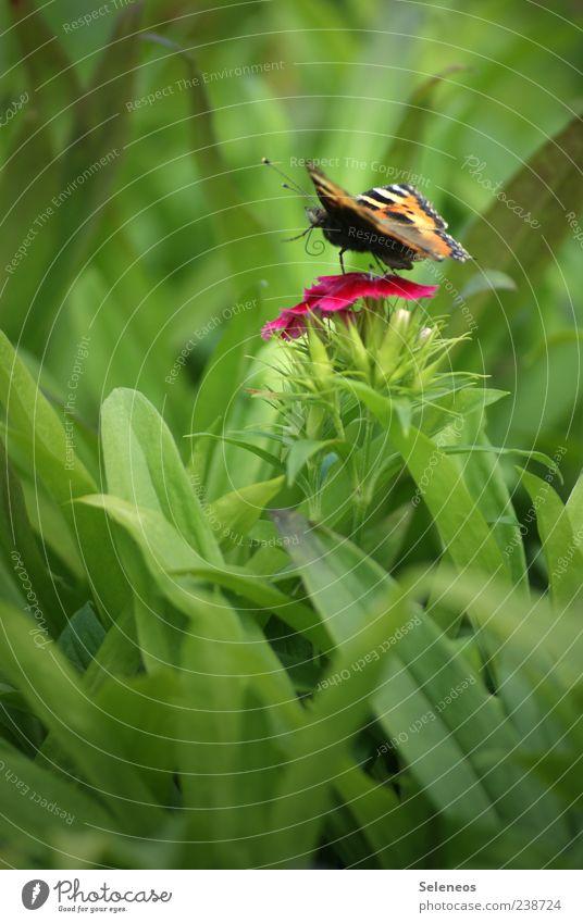 flutter by Natur grün Pflanze Sommer Blatt Tier Umwelt Landschaft Wiese Frühling Gras klein Garten Blüte Park Ausflug