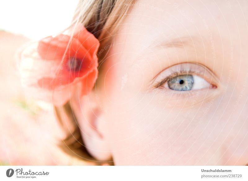 Poppy`s Eye Mensch Jugendliche schön rot Blume Gesicht Auge Gefühle Glück Blüte hell Kindheit natürlich Haut ästhetisch Dekoration & Verzierung