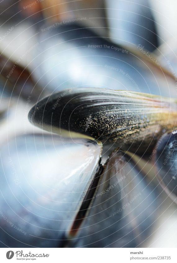 Unterwasserwelt blau Tier schwarz glänzend Muschel Makroaufnahme Detailaufnahme abstrakt Miesmuschel Muschelschale