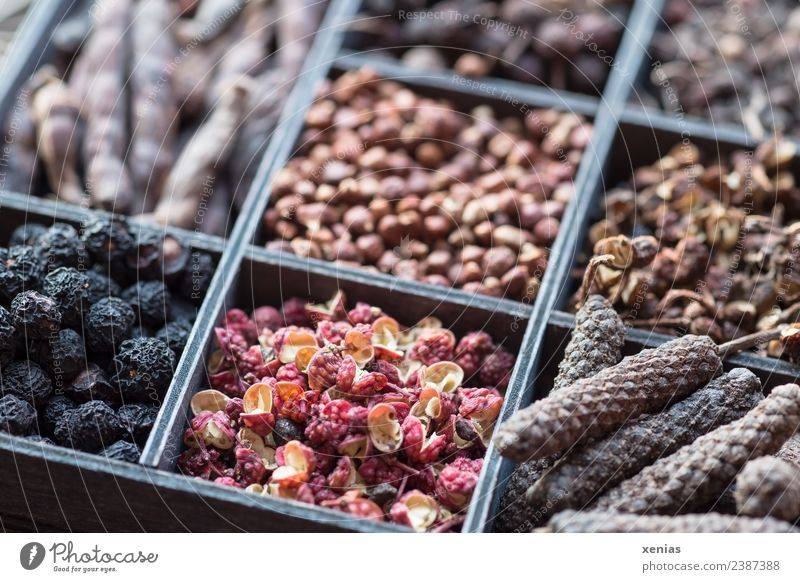 Acht Pfeffersorten im Setzkasten rot schwarz Blüte braun kochen & garen Kräuter & Gewürze Scharfer Geschmack Bioprodukte Vegetarische Ernährung Würzig
