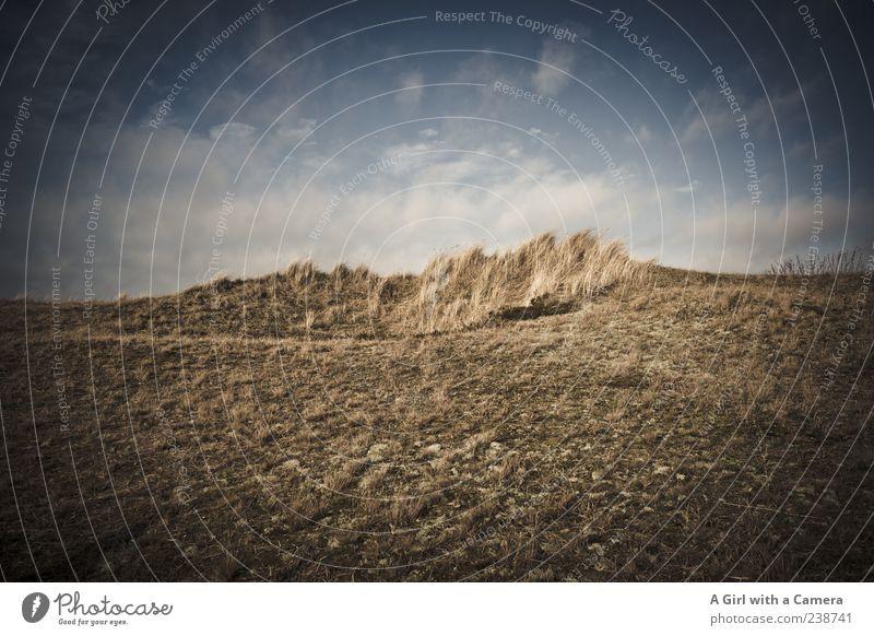 Spiekeroog l für den Meister Ferien & Urlaub & Reisen Umwelt Natur Landschaft Himmel Wolken Schönes Wetter Wind Küste Düne Dünengras außergewöhnlich wild blau