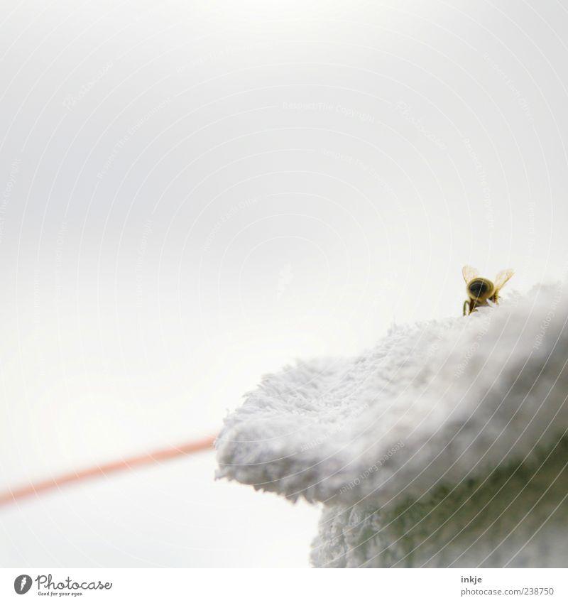 ...und tschüß! Himmel Biene 1 Tier Linie krabbeln klein gelb grau rot weiß einzigartig Natur Umwelt Rückansicht Hinterteil Flügel außergewöhnlich Farbfoto