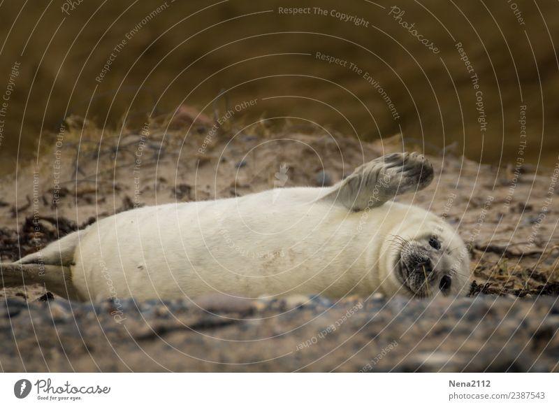 Emotionen | Lebensfreude Umwelt Natur Tier Sand Küste Strand Bucht Nordsee Ostsee Wildtier Fell 1 Tierjunges genießen Kommunizieren liegen Spielen toben
