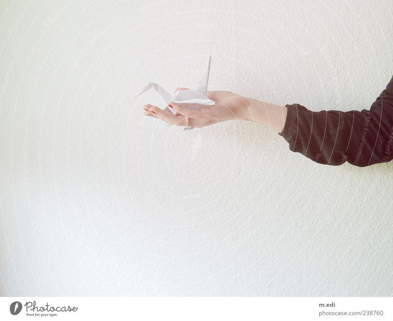 fragile bird Mensch Jugendliche Hand Erwachsene feminin Arme Junge Frau 18-30 Jahre Finger authentisch Papier zeigen haltend Origami Vor hellem Hintergrund
