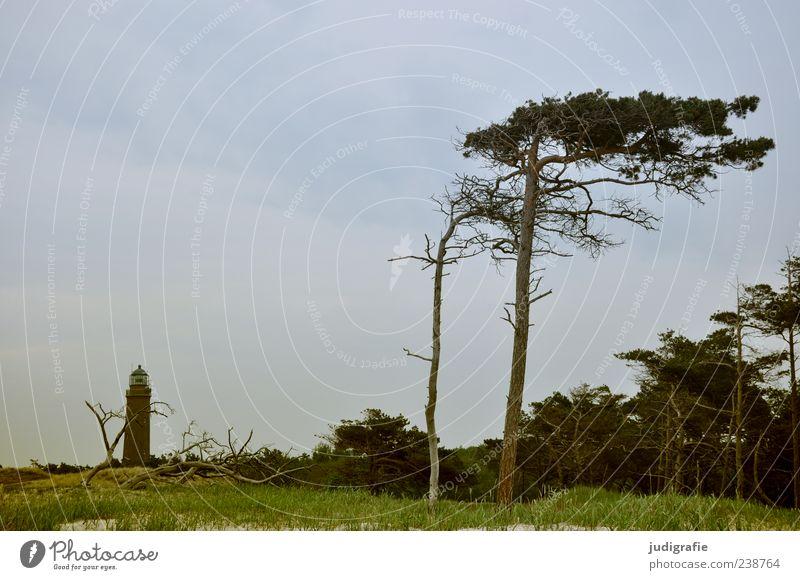 Darßer Ort Umwelt Natur Landschaft Pflanze Himmel Sommer Baum Gras Küste Ostsee Meer darßer ort Prerow Leuchtturm natürlich wild Orientierung Navigation