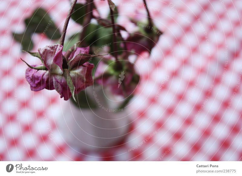 Withering to Death. Pflanze Blume Blatt Blüte rosa Rose nah Blumenstrauß vertrocknet welk Vase stachelig Tischwäsche Vogelperspektive hängend dehydrieren