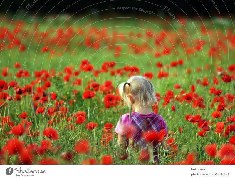 Mohnkrümel Mensch Natur grün rot Pflanze Sommer Mädchen Blume Umwelt Spielen Haare & Frisuren Kopf hell blond Kindheit Feld