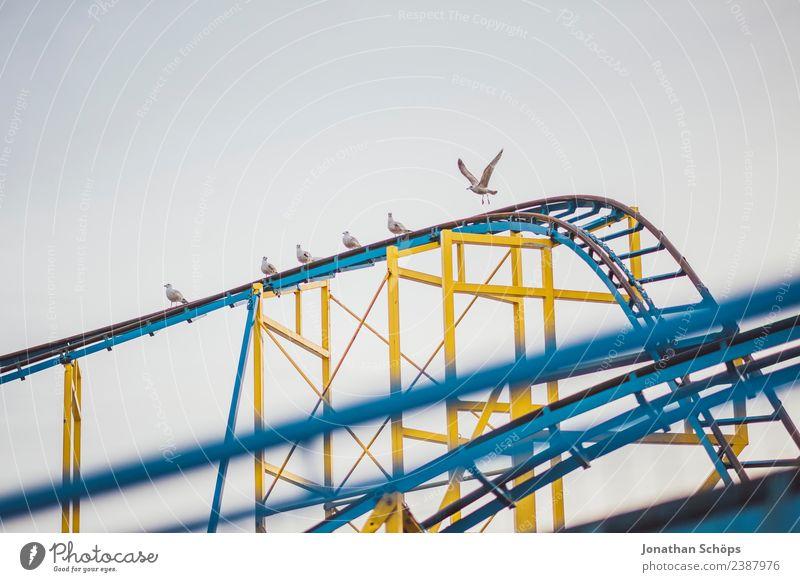 Möwen sitzen auf einer Achterbahn Ferien & Urlaub & Reisen blau Stadt Tier Freude gelb Tourismus Freiheit Vogel Ausflug Freizeit & Hobby Metall retro Kindheit