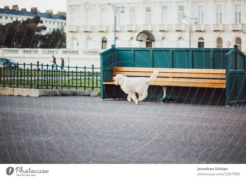 Hund rennt vor Sitzbank, Strandpromenade, Brighton, England Stadt weiß Haus Tier Reisefotografie Straße Architektur Tourismus Fassade ästhetisch Fröhlichkeit