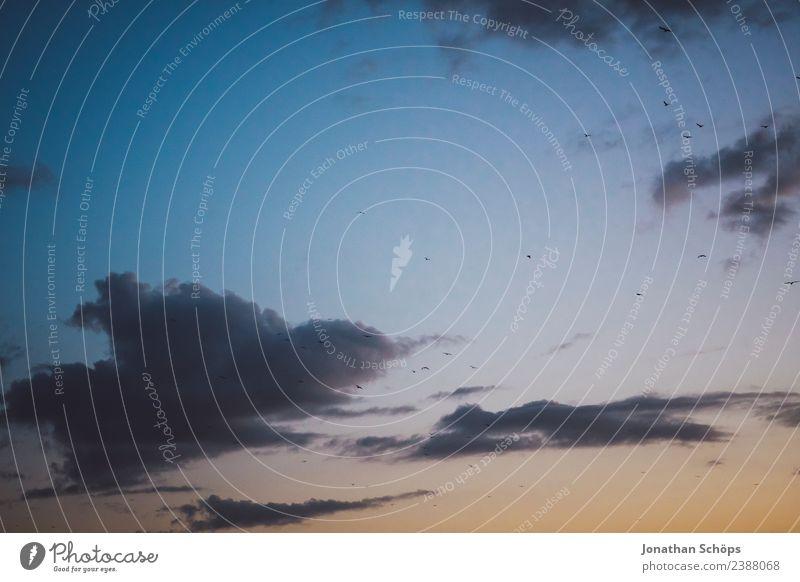 Möwen am Himmel in Dämmerung Umwelt Tier Urelemente Luft Wolken Klima Vogel Tiergruppe Schwarm Möwenvögel Vogelschwarm fliegen Meer Hintergrundbild Farbfoto