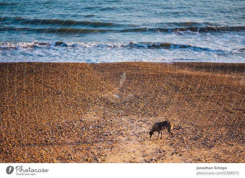 Hund allein am Strand Wasser Meer Tier Einsamkeit Traurigkeit Wege & Pfade Küste Wellen Europa Armut Suche Haustier Hafenstadt Großbritannien