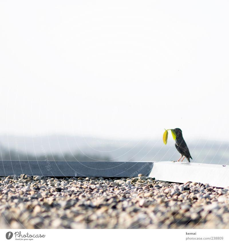 Sammelstar Natur grün Pflanze Blatt Tier schwarz Stein Vogel hell Wildtier sitzen Dach Schönes Wetter Zweig Am Rand Kies