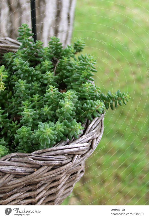 gruene korb ruhig Sommer Dekoration & Verzierung Umwelt Natur Landschaft Pflanze Frühling Klima Wetter Schönes Wetter Gras Grünpflanze Wildpflanze Topfpflanze