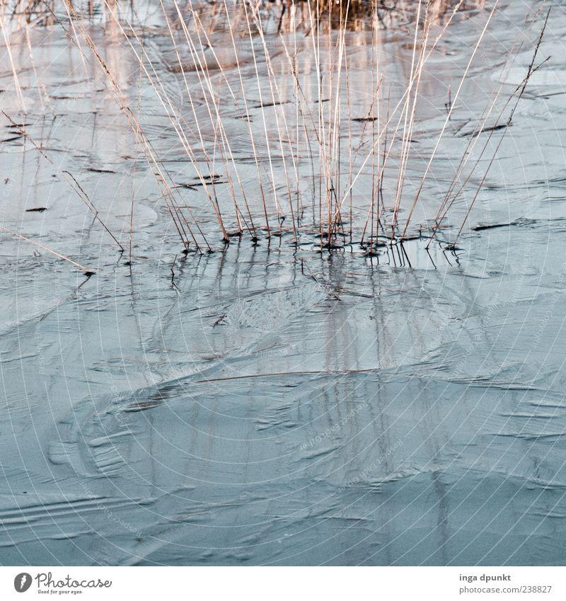 Eiskalt Natur blau Wasser Pflanze Umwelt kalt Gras grau See Eis Klima natürlich Urelemente Frost gefroren Teich