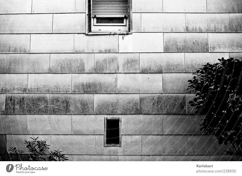 jenseits. Haus Vorgarten Umwelt Pflanze Sträucher Gebäude Mauer Wand Fassade Fenster Rollladen Linie grau schwarz Einsamkeit Rechteck Schwarzweißfoto