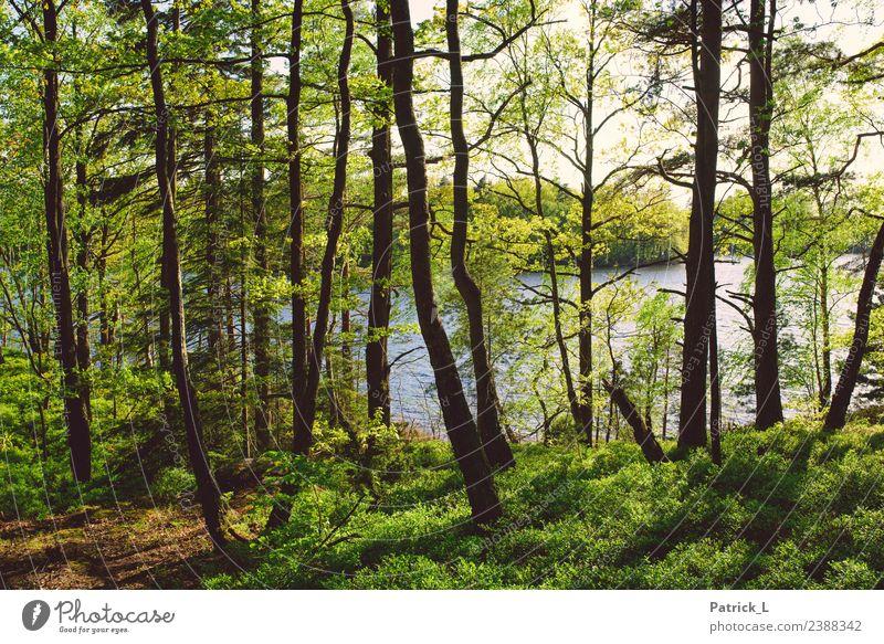 Der Wald Natur Ferien & Urlaub & Reisen Pflanze Sommer grün Wasser Baum Erholung Ferne Gesundheit Umwelt Gras Ausflug Erde frisch