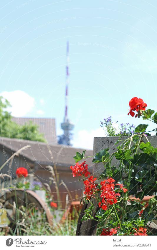 der Alex, aus den Schweizer Bergen... Himmel Natur rot Pflanze Sommer Blume Umwelt Berge u. Gebirge Frühling Garten Blüte Luft natürlich Dach Turm Schönes Wetter