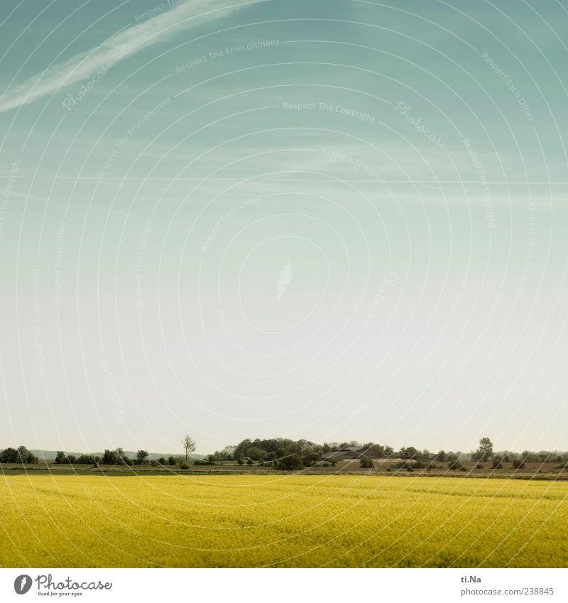 plattes Land Umwelt Natur Landschaft Pflanze Himmel Schönes Wetter Raps Dithmarschen Schleswig-Holstein Blühend Wachstum hell blau gelb Ferne Farbfoto