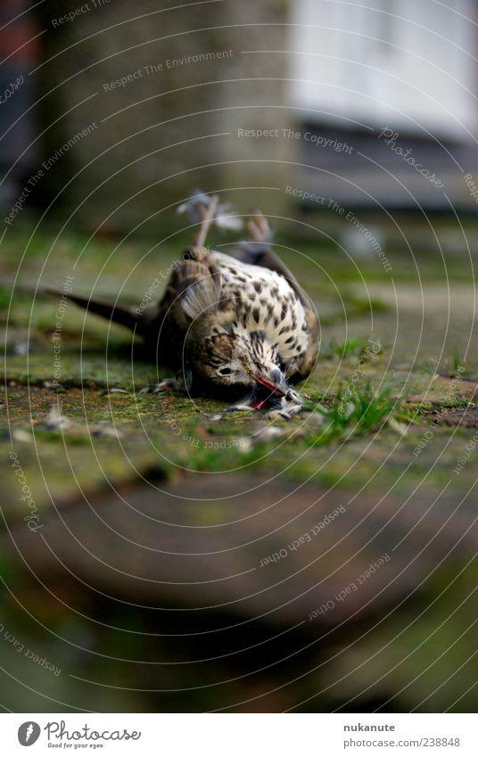 unfall grün rot Tier grau Vogel Stimmung braun Wildtier authentisch Totes Tier