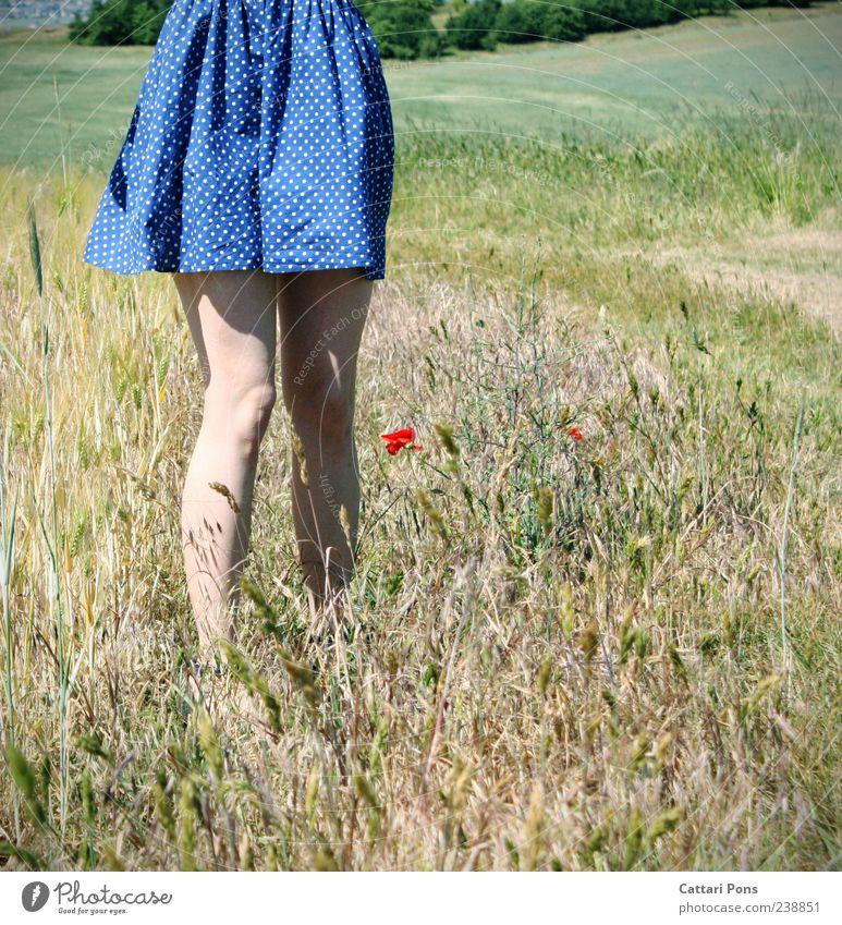 standhaft feminin Junge Frau Jugendliche Erwachsene 1 Mensch Pflanze Blume Gras Blüte Mohn Feld Kleid genießen stehen warten schön Beine rot blau ruhig Wachstum