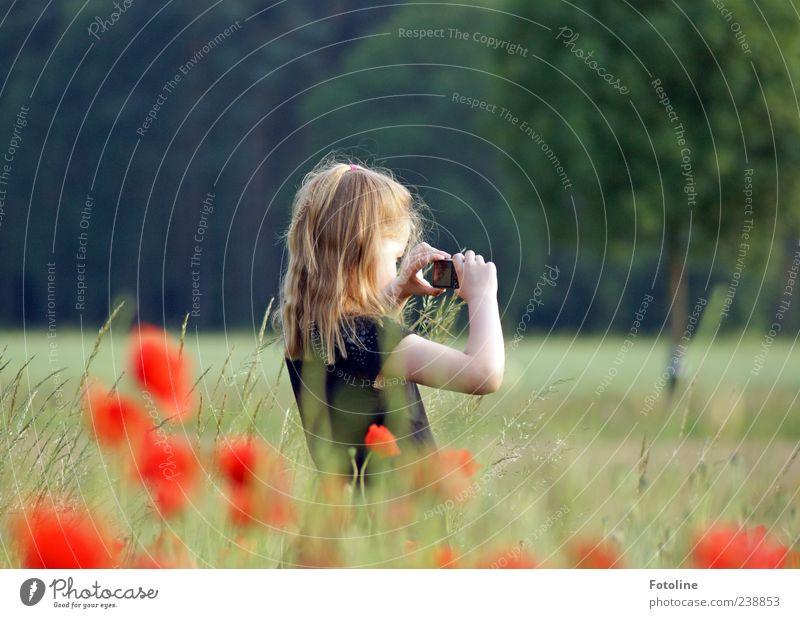 PC-Nachwuchs Mensch Kind Mädchen Kindheit Kopf Haare & Frisuren Arme Hand Umwelt Natur Pflanze Sommer Baum Blume Gras Wildpflanze Wiese hell natürlich