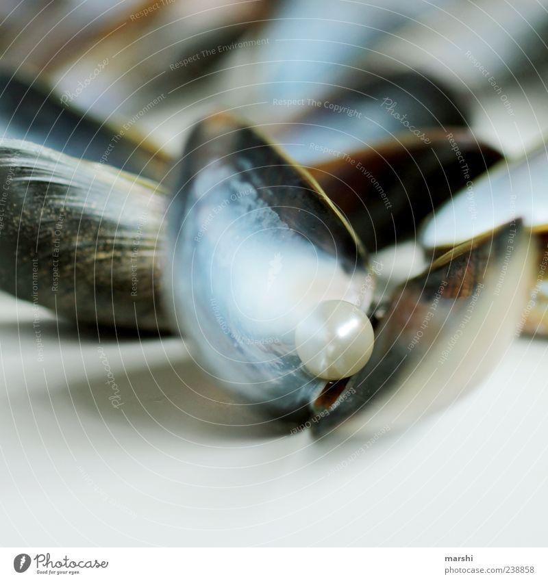 wertvolle Muschel blau Miesmuschel Muschelschale Muschelform Perle Überraschung glänzend schimmern Schmuck Farbfoto Nahaufnahme Detailaufnahme Makroaufnahme 1