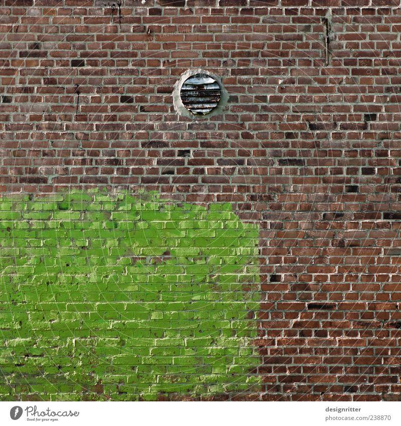 Frühling in Steinland Natur grün Farbe Haus Umwelt Wand Farbstoff Mauer Gebäude Wandel & Veränderung Hoffnung Vergänglichkeit streichen Backstein standhaft