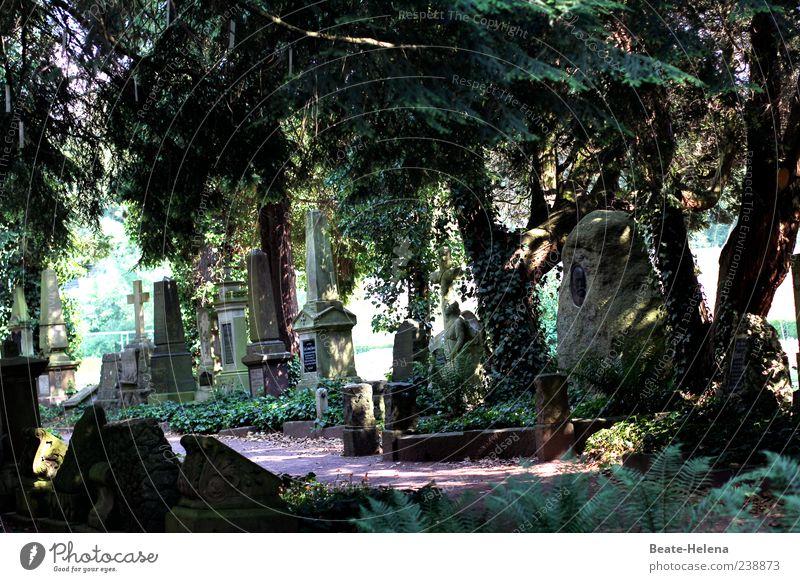 Über allen Gipfeln ist Ruh Natur alt grün Baum ruhig Tod Traurigkeit Park braun Trauer Ende Unendlichkeit Gelassenheit Verfall Erinnerung Friedhof