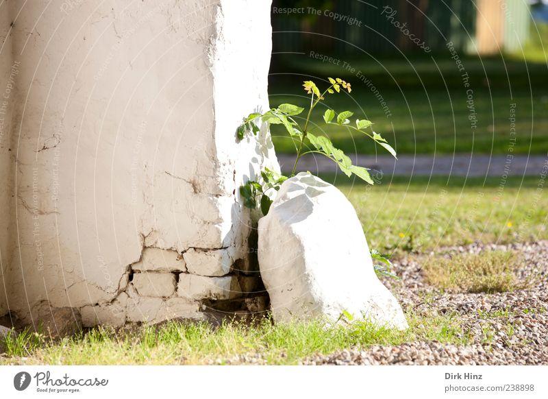 Neues Leben Natur Pflanze grün weiß Landschaft Blatt ruhig Haus Wand Wiese Gras Mauer Stein Park Erde