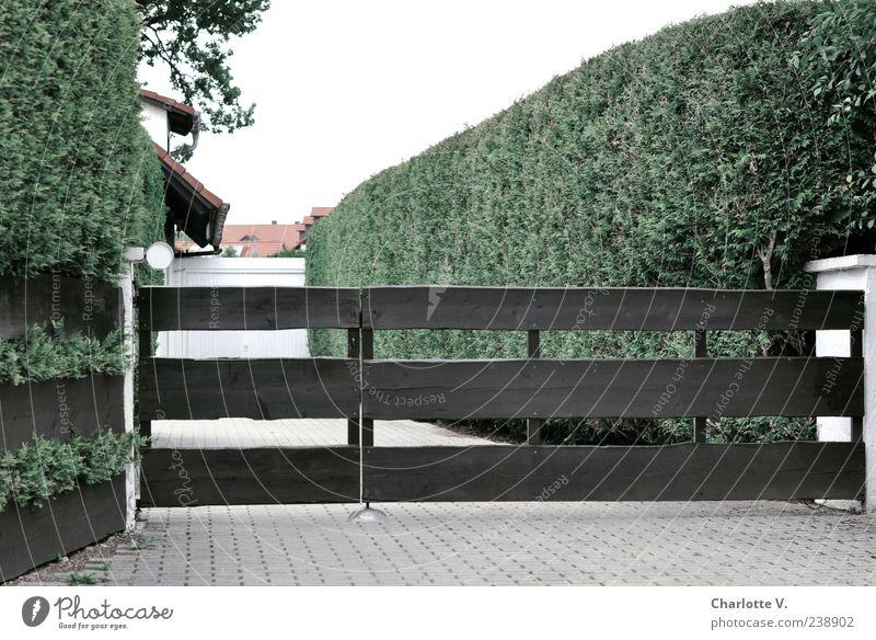 Thuja Eingang grün Pflanze Tier Holz grau Stein Garten hell braun Beton Häusliches Leben Dach trist Sauberkeit Garage Hecke