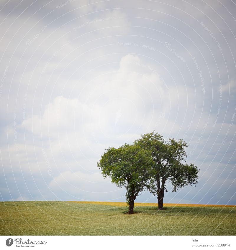 zwei Natur Landschaft Pflanze Himmel Wolken Baum Gras Grünpflanze Feld Unendlichkeit Farbfoto Außenaufnahme Menschenleer Textfreiraum oben Tag Wolkenhimmel