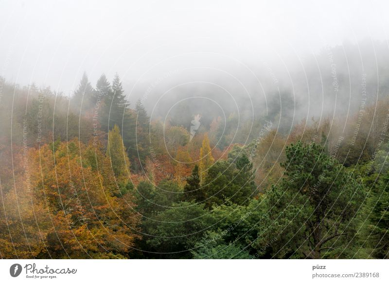 Nebelwald Ferien & Urlaub & Reisen Tourismus Ausflug Abenteuer Berge u. Gebirge wandern Umwelt Natur Landschaft Pflanze Herbst Wetter Baum Wildpflanze Wald