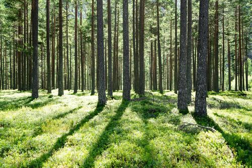     GRÜN     Ferien & Urlaub & Reisen Tourismus Ausflug Abenteuer Ferne Freiheit Sommer wandern Umwelt Natur Landschaft Pflanze Schönes Wetter Baum Gras