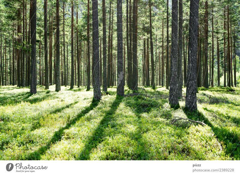 ||| GRÜN ||| Natur Ferien & Urlaub & Reisen Pflanze Sommer grün Landschaft Baum Ferne Wald Wärme Umwelt natürlich Holz Gras Tourismus Freiheit