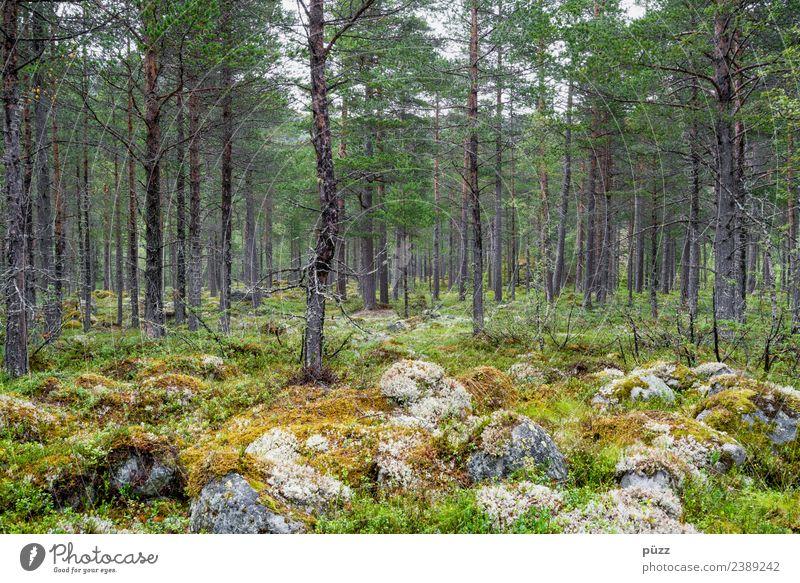 Wald Zufriedenheit Erholung Ferien & Urlaub & Reisen Ausflug Abenteuer Freiheit Sommer wandern Umwelt Natur Landschaft Pflanze Erde Baum Sträucher Moos