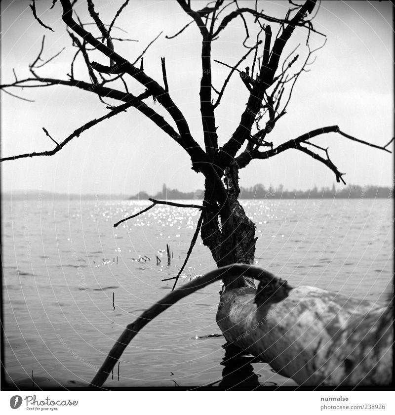 Kontrast I Natur Wasser Ferien & Urlaub & Reisen Baum Sommer Strand Freude Ferne Landschaft Küste träumen Stimmung Wellen Freizeit & Hobby glänzend