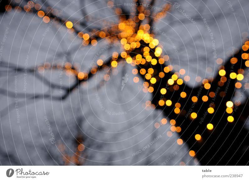 Birnenbaum Himmel Natur blau Weihnachten & Advent Baum schwarz Umwelt gelb dunkel Gefühle Lampe gold glänzend Elektrizität leuchten Dekoration & Verzierung