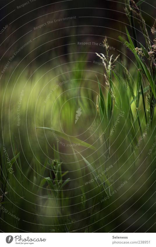 Spaziergang im Grünen Natur schön Pflanze Sommer Umwelt Wiese Gras natürlich Wachstum Grasgeflüster