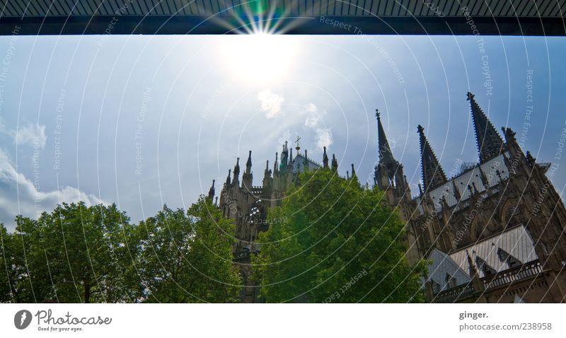 Mit Aussicht auf den Dom Himmel Sommer Baum Wand Architektur Mauer Gebäude Fassade hoch Kirche leuchten Schönes Wetter Dach Turm Spitze Kultur