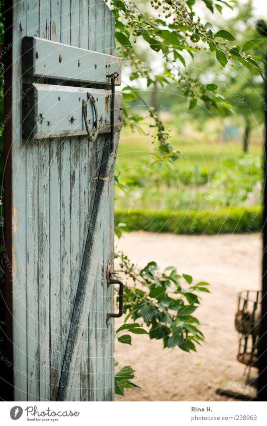 Gute Aussichten Sommer Schönes Wetter Tür authentisch ländlich Landleben Bauernhof Garten Holztür Farbfoto Außenaufnahme Menschenleer Sonnenlicht