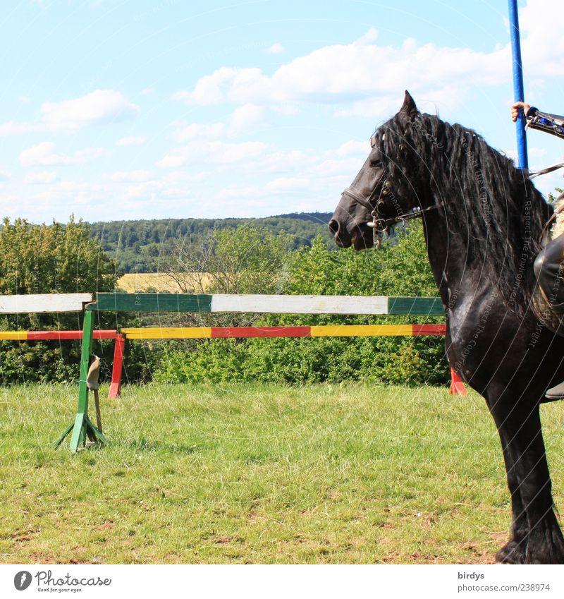 Ritter-Sport - quadratisch, praktisch.... Tier schwarz außergewöhnlich glänzend stehen ästhetisch Schönes Wetter Kraft Show Pferd Team Zaun Mut Festspiele