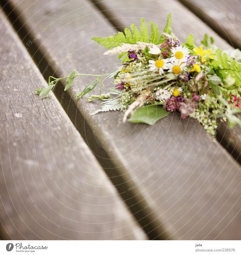 von herzen schön Pflanze Blume Blatt Gras klein Blüte Freundschaft Zusammensein Warmherzigkeit Blumenstrauß Holzbrett Sympathie Holzpfahl Mitgefühl Wiesenblume