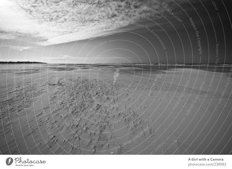 Spiekeroog l relentlessly chasing clouds Himmel Natur Meer Strand Wolken Einsamkeit Ferne Landschaft Küste Sand Horizont Wellen natürlich authentisch Idylle